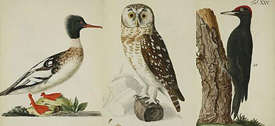 Kultur: Der Ornitologe der Kunst: Johann Friedrich Naumann