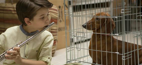 Wiener Dog Film Trailer
