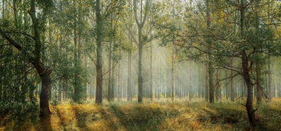 Wald Valiphotos