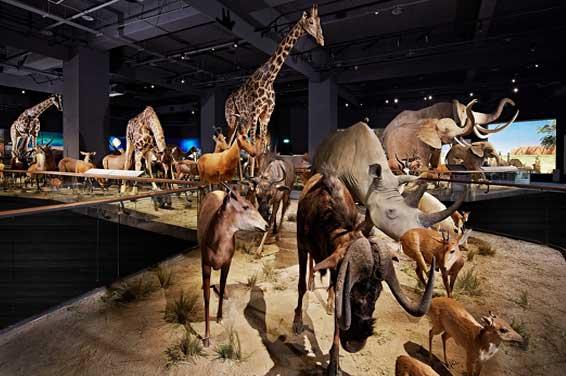 Chimei Museum Naturkunde und Fossilien