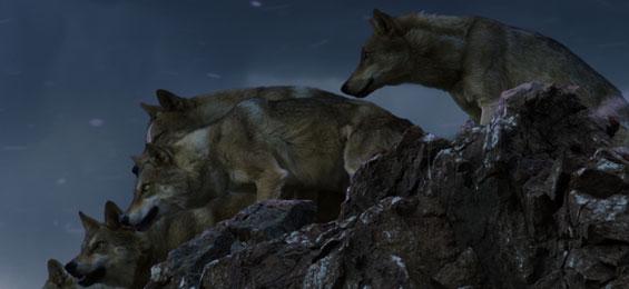 Der letzte Wolf Film Trailer
